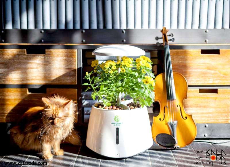با گیاهان خانه گپ بزنید
