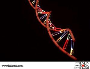برای کدهای ژنتیکی تان رمز بگذارید|کالاسودا