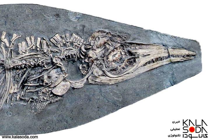 آشنایی با یک نوزاد 200 میلیون ساله که در دل مرکب ماهی پنهان بود|کالاسودا