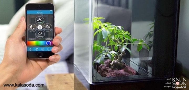 گلخانه ی کوچک رو میزی قابل برنامه ریزی|کالاسودا