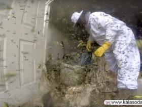ویدئوی مرد زنبوردار پربازدیدترین ویدئوی جمعه سیاه شد|کالاسودا