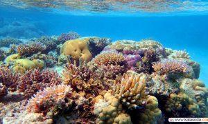 نقشه های سه بعدی برای رصد کردن مرجان ها|کالاسودا