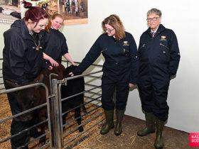  کالاسوداسرمایه گذاری عظیم بیل گیتس برای تولید یک گاو استئنایی