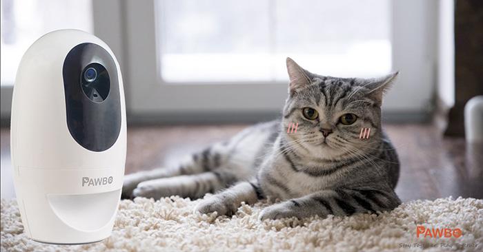 شرکت ایسر در سال 2016، Acer به تولید کننده دوربین وایرلس حیوانات خانگی Pawbo تبدیل شد.
