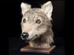 تصویر یک سگ 4000 ساله