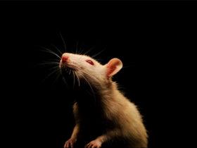 بد افزار RAT چیست و چرا بسیار خطرناک است؟