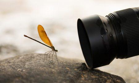 عکاسی در حالت ماکرو ، بهترین انتخاب برای سوژه های مینیاتوری