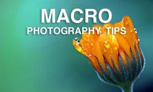 آشنایی با اصول عکاسی ماکرو